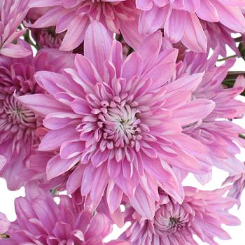 Pink flower cushion gallery flower decoration ideas cushion bunches mightylinksfo mightylinksfo